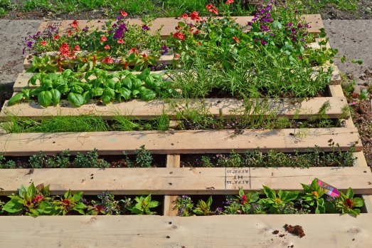 Here is the pallet garden after I first planted it (May 1, 2013).